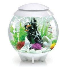 biOrb Halo Aquarium Bowl Size 30  H x 30  W x 30   sc 1 st  Pinterest & Biorb setup ideas | ?????????? | Pinterest | Fish tanks Aquariums ...
