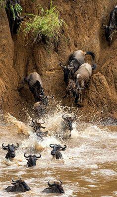 Mayhem on the Mara... (by Morkel Erasmus on 500px)
