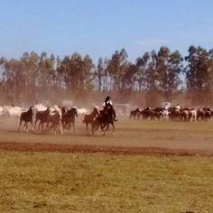 Loberia pcia de Buenos Aires.