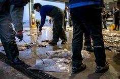 揭秘韩国最臭食物洪鱼脍:闻起来像公共厕所(图)