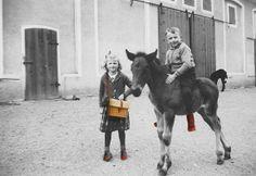 rosa mosa Goats, Horses, Animals, Fashion, Moda, Animales, Animaux, Fashion Styles, Animal