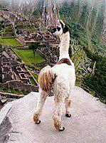Machu Picchu - Wikipedia