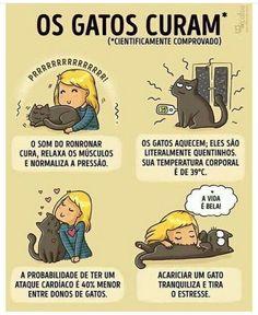 Cat Care Keeping Your Cat Healthy - Cat's Nine Lives I Love Cats, Cute Cats, Funny Cats, Adorable Kittens, Funny Horses, Funny Animal, Crazy Cat Lady, Crazy Cats, Cat Comics