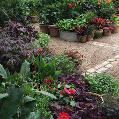 Pots, pots, pots - all over #clausdalby #flowers #blomster #garden #bouquet