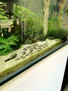 Bild in voller gr e anzeigen pinterest for Wasserpflanzen ikea