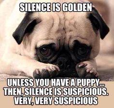 Puppy silence