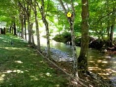 Trout stream on the property.  2799 Big Horse Creek Rd Lansing, NC 28643 - Ashe County For Sale