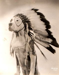 Petey from The Little Rascals! All hail the chief!! #PitBulls #PitBull #Petey