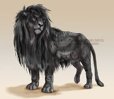 The king of the Achidar pride, Theseus. He is the oldest lion (over 100 years old) and also the most dangerous/strongest. He is so old, damaged body and joints, and is vulnerable. He does no more u...