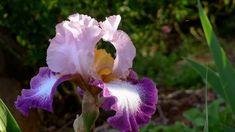 ERNESTO CORTAZAR - HISTORIA DE UN AMOR - MI AMOR POR TI - BEAUTIFUL FLOWERS Paper Roses, Piano Music, Beautiful Birds, Romance, Film, Artist, Plants, Photography, Youtube