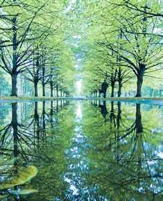 Tree Lane Reflections