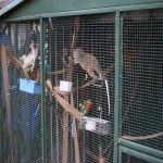 I love my shed/aviary because since I purchased it I have been able to be an active member of Sydney Wildlife. I rescue native animals and rehabilitate them so they can be released back into the wild Shed, Wildlife, Animals, Animales, Animaux, Animal, Animais, Barns, Sheds