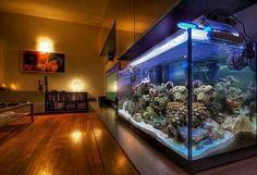 Przyjemne usiąść w domu i zamiast telewizora oglądać życie toczące się w akwarium. Piękna rafa koralowa, ryby, światło - daje nam poczucie relaksu i odpoczynku po całym męczącym dniu. Jesli szukasz oświetlenia do swojego akwarium, zapraszamy do sklepu AQUA-LIGHT.pl Szeroki wybór oświetlenia - szybka i bezpieczna wysyłka w całej Europie!