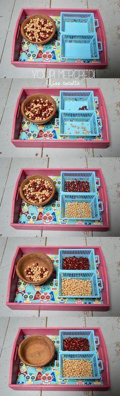 Retour au choses sérieuses, voici l'activité préférée de mes élèves : le tri de graines. Je découvre grâce à cette activité de type Montessori chez mes élèves les plus agités une capacité bien enfouie! à se concentrer et à mener une activité à son terme. Ils sont captivés!