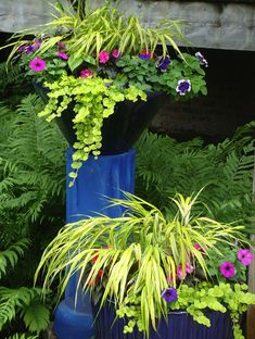 Shade: golden hakone grass, 2 colors petunia, creeping jenny