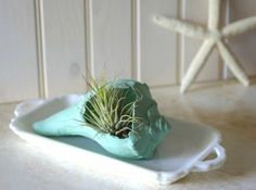 imperfect, made perfect.  shell air plant