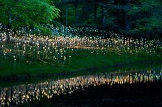 """Los bosques encantados de Bruce Munro están sembrados de miles de luces mágicas de led que brillan durante la noche y que generan una atmósfera muy cautivadora digna de """"Alicia en el País de las Maravillas"""""""
