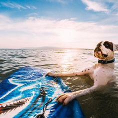 Photo of the Day: The only thing cooler than a #shark bodyboard is a #dog about to #shred on a shark #bodyboard. : @eleni_ralph_sylvie • • • #GoPro #Greece #GoProSurf #GoProPets #DogsOfInstagram