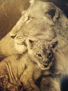 Joy Adamson Elsa and cub