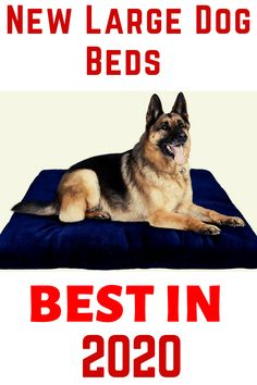 If you want to know Top 5 best dog beds for large dogs then this post is all about you.all are New and Update doggie beds for large dog. check the Description for more details.
