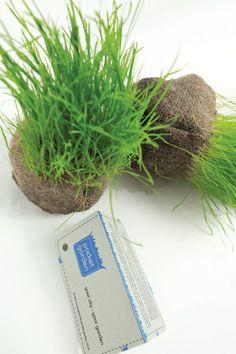 Pocket-garden's product by Mansi Shah and Karl Maisinger    #pocketgarden, #seedball, #seedball, #grass  #guerrillagardening #guerrillabombs