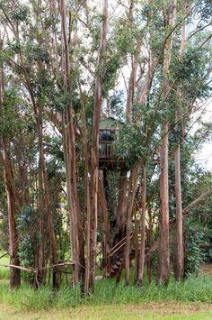 Tree House Swallowtail Magic Grove