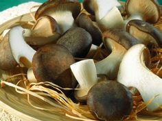 Funghi cardoncelli. Spontani in puglia  www.cucinare.meglio.it