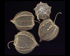 scan of fruit husks of a species of Physalis Botanical Illustration, Botanical Prints, Chinese Lanterns, Foto Art, Seed Pods, Natural Forms, Botany, Flower Art, Planting Flowers