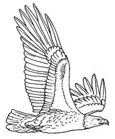 Elegant Eagle Coloring Book 67 Big Eagle Coloring For