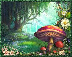 Heksen, Kabouters en paddenstoelen
