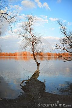 Picture of a tree in early spring by the Danube.