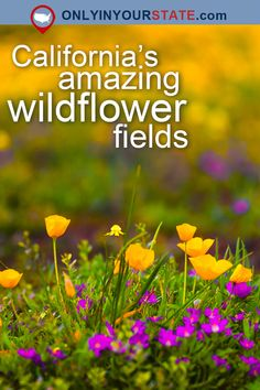 This Breathtaking Field Of Wildflowers In Northern California Looks Like Something From A Dream California Wildflowers, California Poppy, California Travel, Northern California, Hiking Places, Hiking Spots, Hiking Trails, Vacation Trips, Day Trips