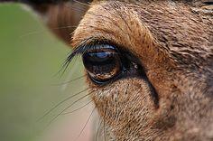 עין רזאל | בהרים