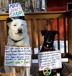 Adopt,Adopt,Adopt!!!