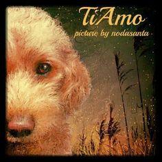 PCペイントで絵を描きました! Art picture by Seizi.N:                #トイプードル #イラスト #TiAmo #愛犬 #dog #YouT...