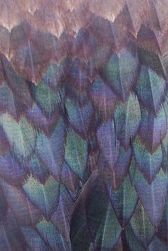 Alpines: Macro Feathers