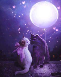 Cats life...