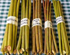 Willow cuttings for basketry and gardens for sale from Dunbar Gardens, willow grower and basket maker in Washington State