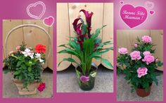 Comblez votre Maman avec des fleurs ! - lejardindechauffin.com