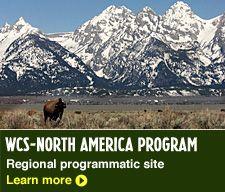 American Bison Society