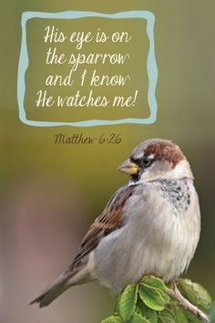 Sparrow Tattoo Biblical Meaning