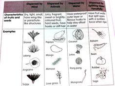 Go, Seeds, Go! Seed dispersal worksheet.   Co Op Ideas   Pinterest ...