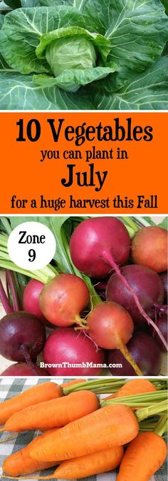 It's not too hot to garden! Plant these 10 vegetables in July for a huge harvest this Fall. Includes recommended varieties and growing tips. (Zone 9)