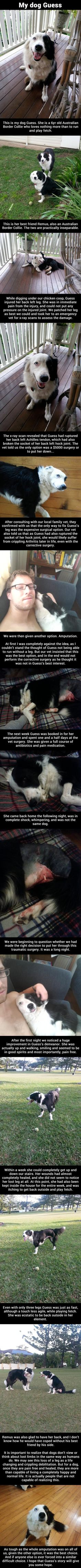 dog Guess and the story of her leg amputation Guess is the most adorable Australian border collie I've seen, and I especially love the way her face seperates into black and white! Animals And Pets, Baby Animals, Funny Animals, Cute Animals, Cute Puppies, Cute Dogs, Dogs And Puppies, Doggies, Awesome Dogs