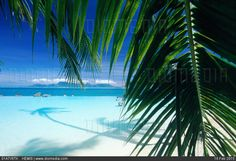 French polynesia society islands tahiti palme and lagoon. Millions of premium Stock photos and illustrations created by leading commercial photographers, world-famous Museums, Historical Archives and Private Collections. Image ID: Society Islands, Travel Images, French Polynesia, Tahiti, Places To Visit, Stock Photos, Beach, Water, Outdoor