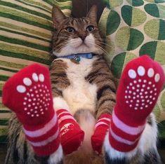 Warm feets.