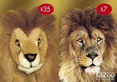 Real or fake lion