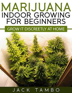 Beginners Growing Marijuana Indoors