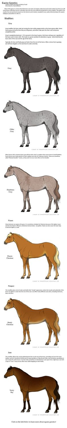 Equine Genetics Guide: Part 2 by ~daughterofthestars