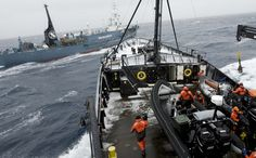Sea Shepherd Drives Japanese Whalers Out of Antarctic Whale Sanctuary